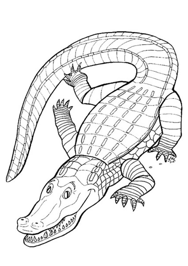 free online crocodile colouring page - Australia Coloring Pages Kids
