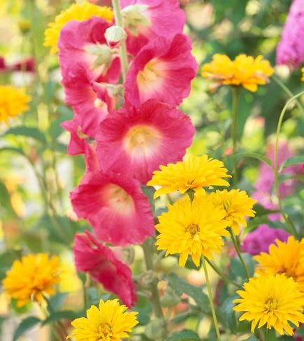 10 Top Summer Plant Pairs | Midwest Living