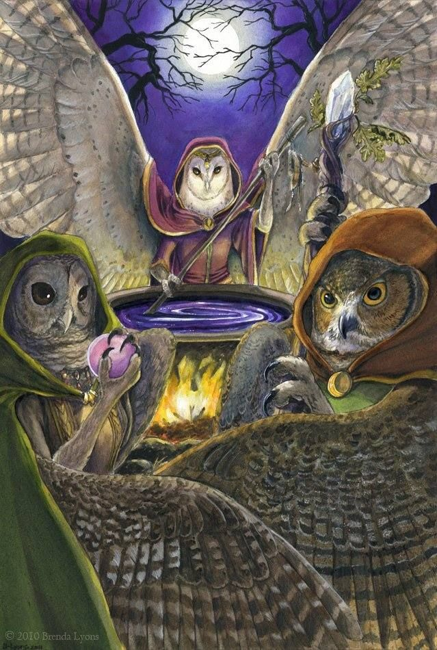 Witches And Owls