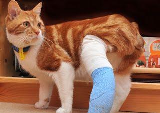 Howto: Cum sa salvezi un pisic muscat de un caine