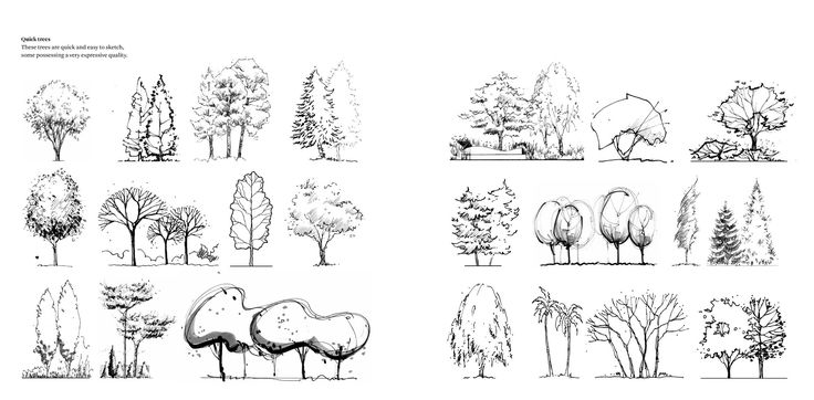 landscape design scale drawing