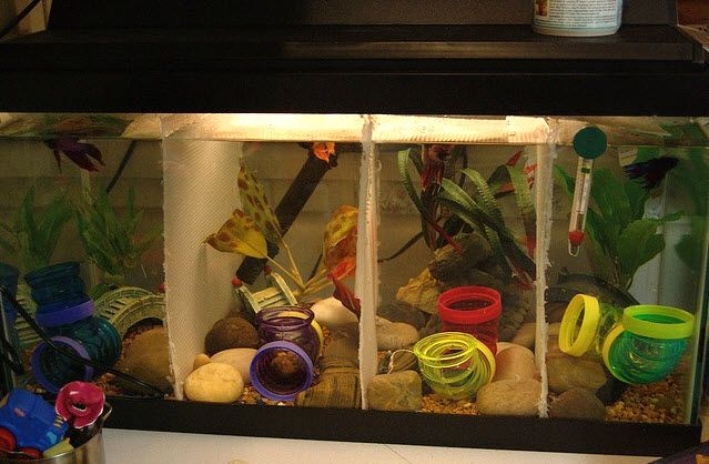 Want a fun, colorful cave for your aquarium? Use hamsters tubes! - PetDIYs.com