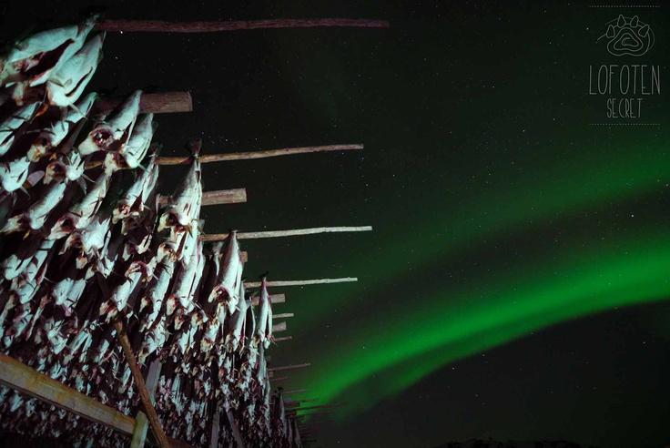 Gimsøy, Lofoten, Northern Ligths, Nordlys, Aurora Boreal, Aurore Boréale