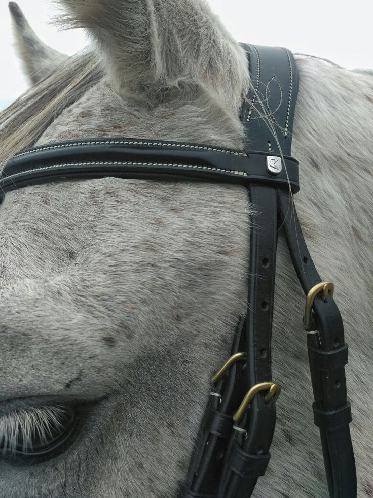New bridle