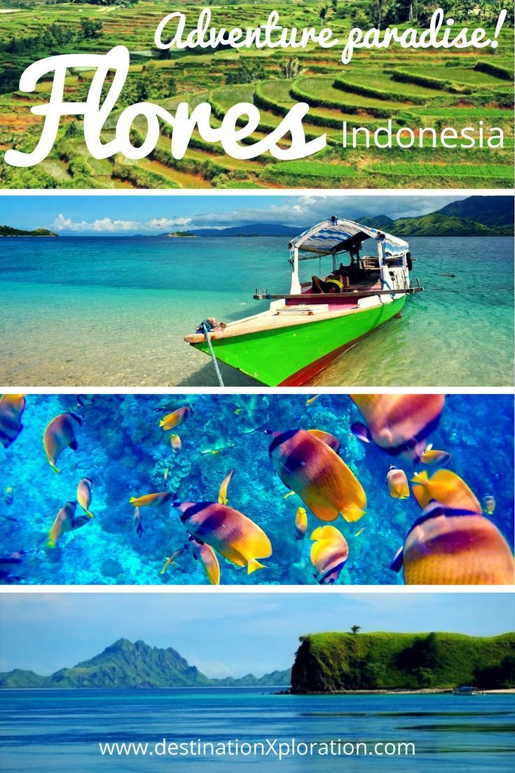 Go off the beaten path from the already #offthebeaten path Flores island in #Indonesia! A combination of isolated paradise islands, rainforests, underwater WOW and a real sense of getting off the tourist trail. This #island is hyper diverse multi-adventure #paradise on both sides of the surface. #adventuretravel #destination #diving #freediving #hiking #tropics #safe #culture #komodonationalpark