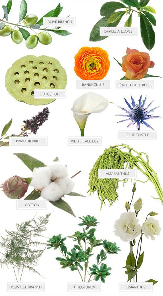 Names Of Blue Coloured Flowers Best Flower 2017