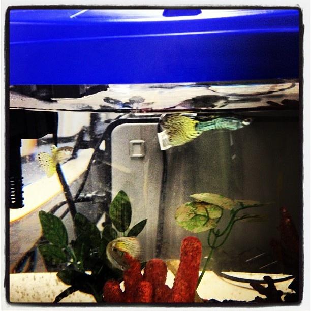 Fancy Fish Tanks 25 best fishy friends images on pinterest   fish tanks, underwater