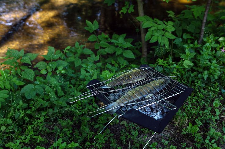 Would you like to bbq some fishes?