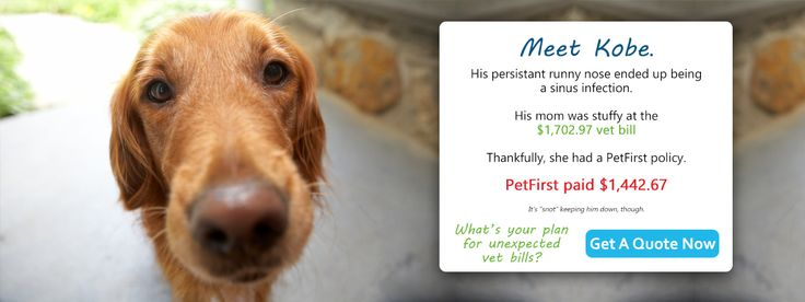 Trusted Pet Insurance for Dogs and Cats   PetFirst Pet Insurance