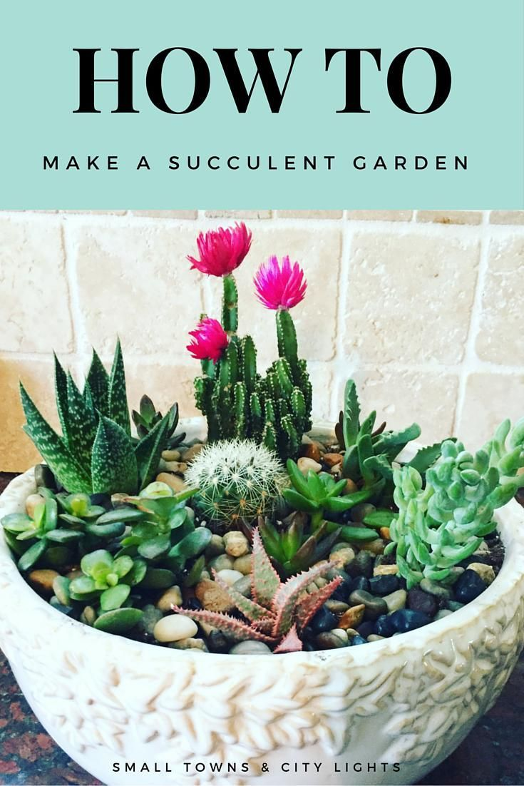 17 Best ideas about Succulent Rock Garden on Pinterest