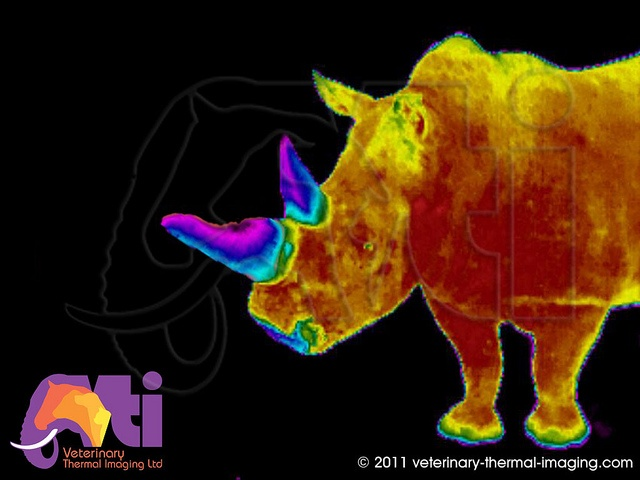 SAVE THE RHINO !!Infrared Thermal Image of a Rhino, via Flickr.