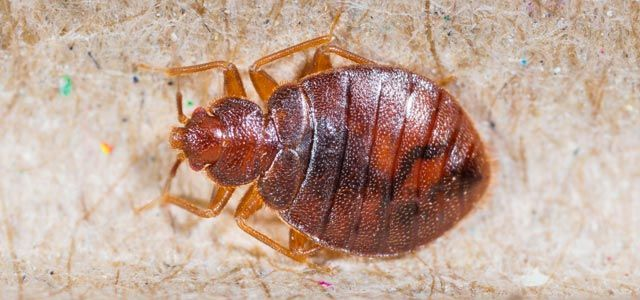#Bed #Bug #Removal Toronto that can really assist you to eradicate the #pest #problem competently.