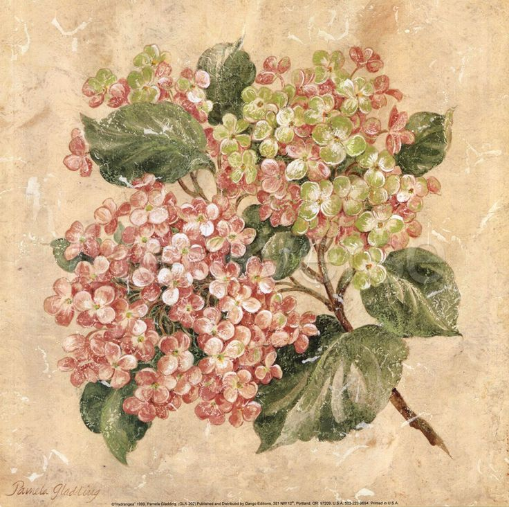 List Of Synonyms And Antonyms Of The Word: Hydrangeas