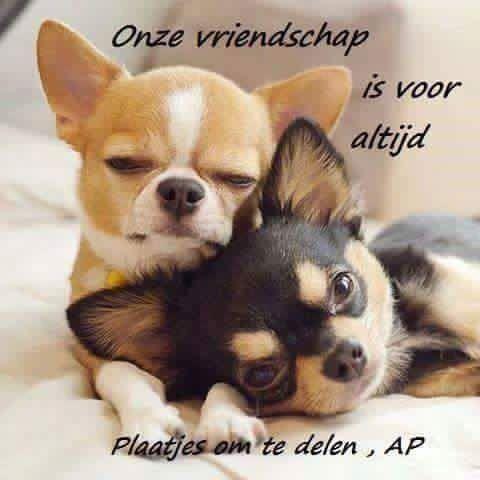 Onze vriendschap is