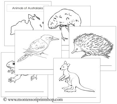 Animals of the Continent Booklets - Printable Montessori Geography materials for Montessori Learning at home and school.