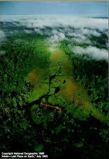The Congo rainforest-10 Worlds Amazing Forests
