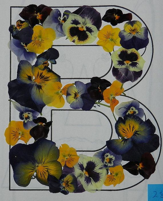 Real Pressed Dried Flowers 28 Pansy or Viola by TickiesTreasures, $4.99