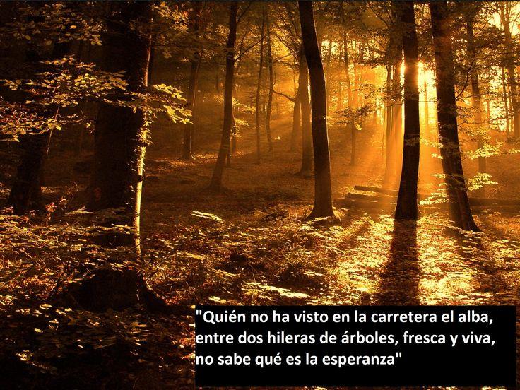 Bosque Atardecer Frases C 233 Lebres Pinterest