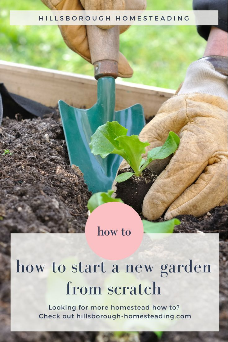 So you've bought your new homestead. What now? Learn from our mistakes and start your new vegetable garden the right way.   Hillsborough Homesteading