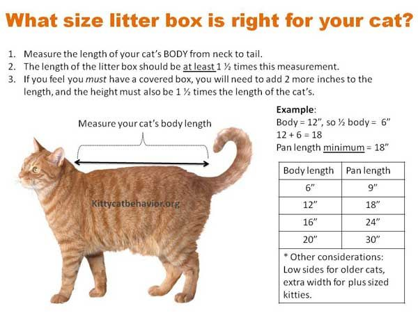Top 12 Best Litter Box For Large Cats Experts Picks of
