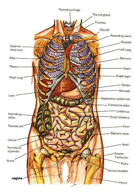 Anatomy of human body : DIAGRAMS