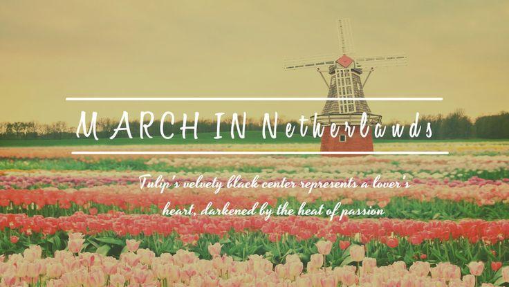 """【旅游】跟随着12个月份的花季,到不同的国度,找寻属于你的""""浪漫""""。"""