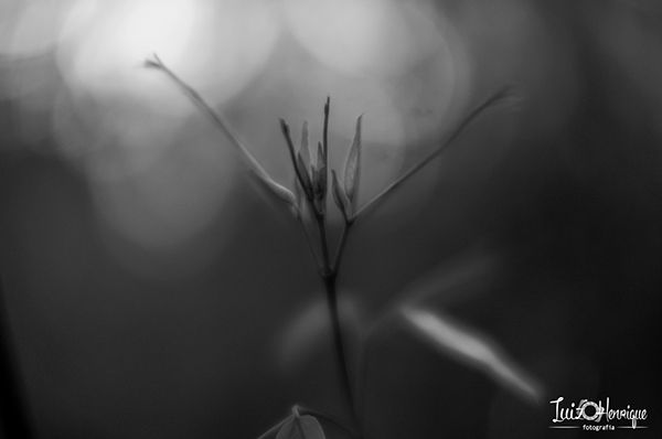 Black and White on Behance