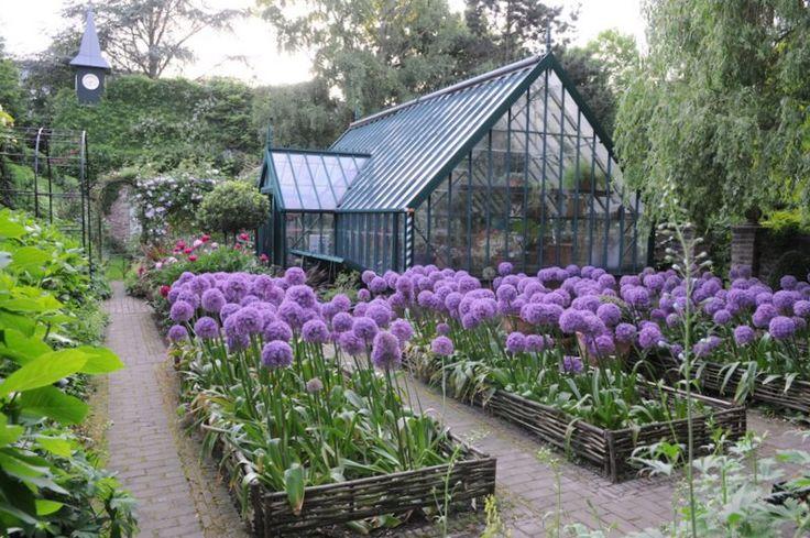 edible landscaping allium garden jardin d 39 herbes aromatiques greenhouses conservatories. Black Bedroom Furniture Sets. Home Design Ideas