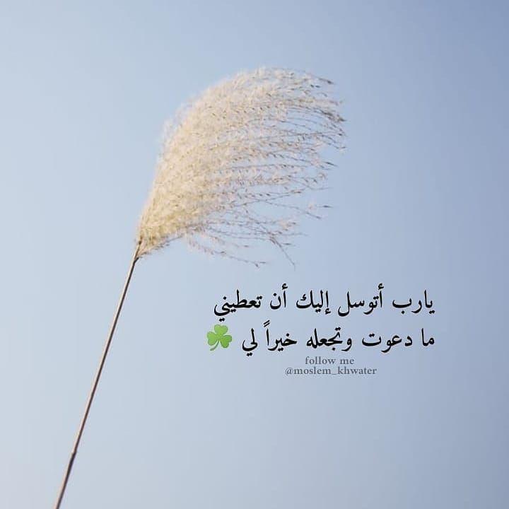 الله معي وبه أكتفي On Instagram اللهم امين يارب تابعونا Muslim Allh تابعونا Muslim Allh تابعونا Muslim A Follow Me Plants