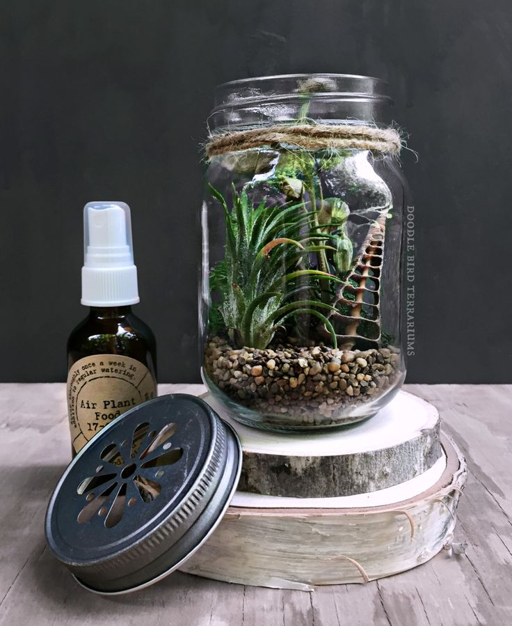 Best images about terrariums and miniature gardening