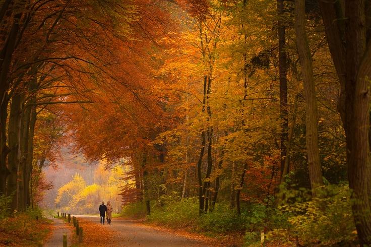 Herfstkleuren. Foto: @BasWeetink