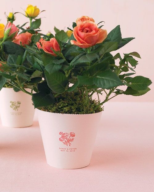 potted plants for wedding centerpieces | Potted Rose Wedding Centerpieces | Budget Brides Guide : A Wedding ...