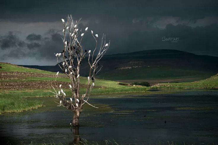 Stormy skies- Wakkerstroom South Africa