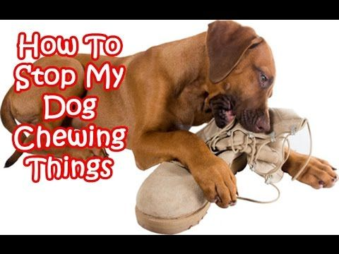 How To Stop Dog Chewing - Best top care with dogs http://dogcoachinggenius.com/category/dog-training-obedience/