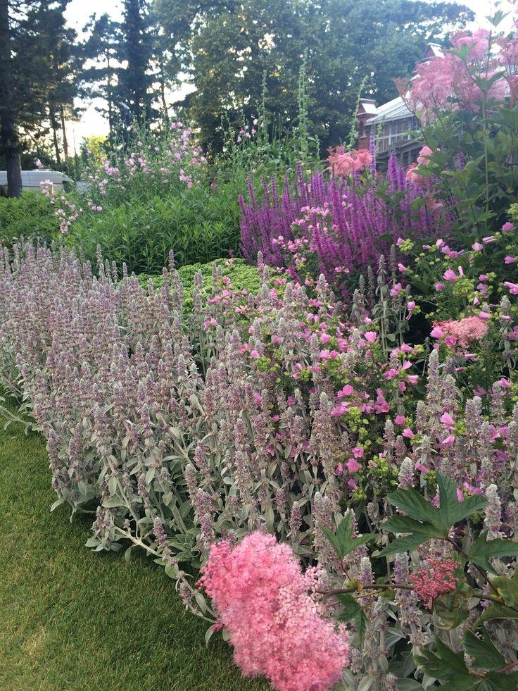 Helsingin talvipuutarhan ihanat ruusut - Gardener | Lily.fi