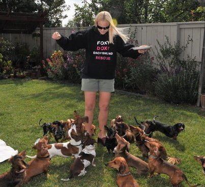 Foxy Doxy Dachshund Rescue. Looks like heaven to me!!!