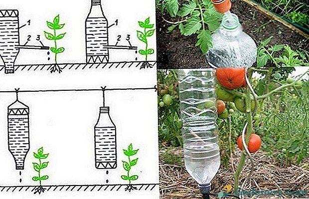 Co Mozna Zrobic Z Plastikowych Butelek Wlasnymi Rekami Na Letni Domek Ogrod I Ogrod Warzywny Kitchen Garden Vegetable Garden Garden