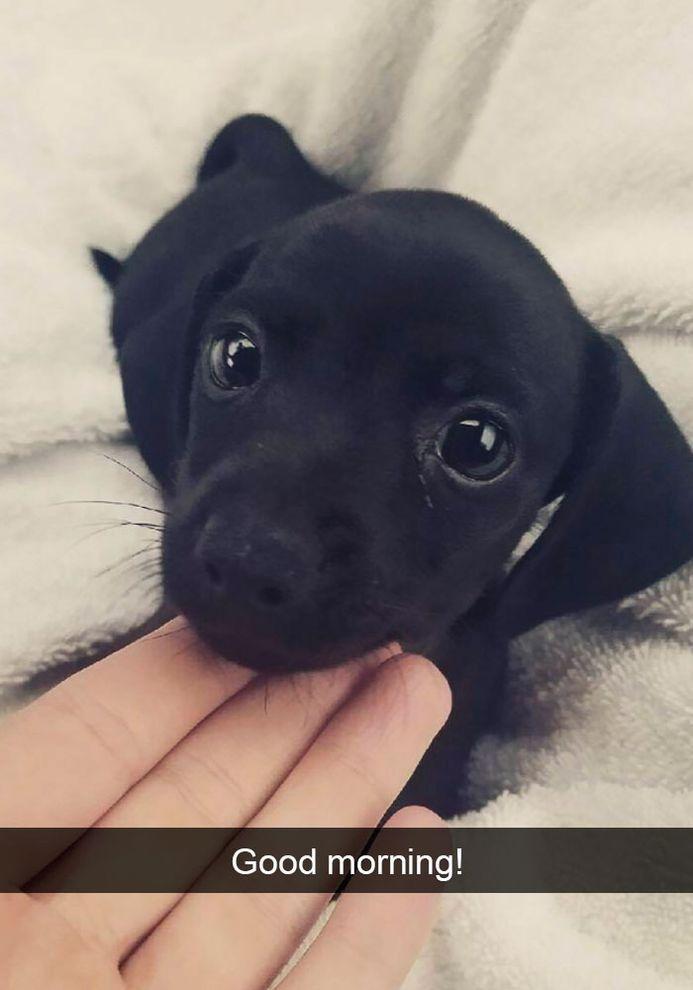 Funny Snapchats Dog Photo 190 Pics