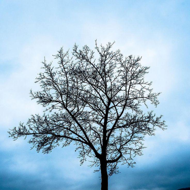 #instalove #instadaily #instamood #tree #sky