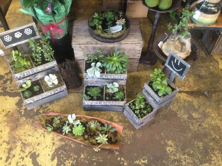 Our Succulent Display