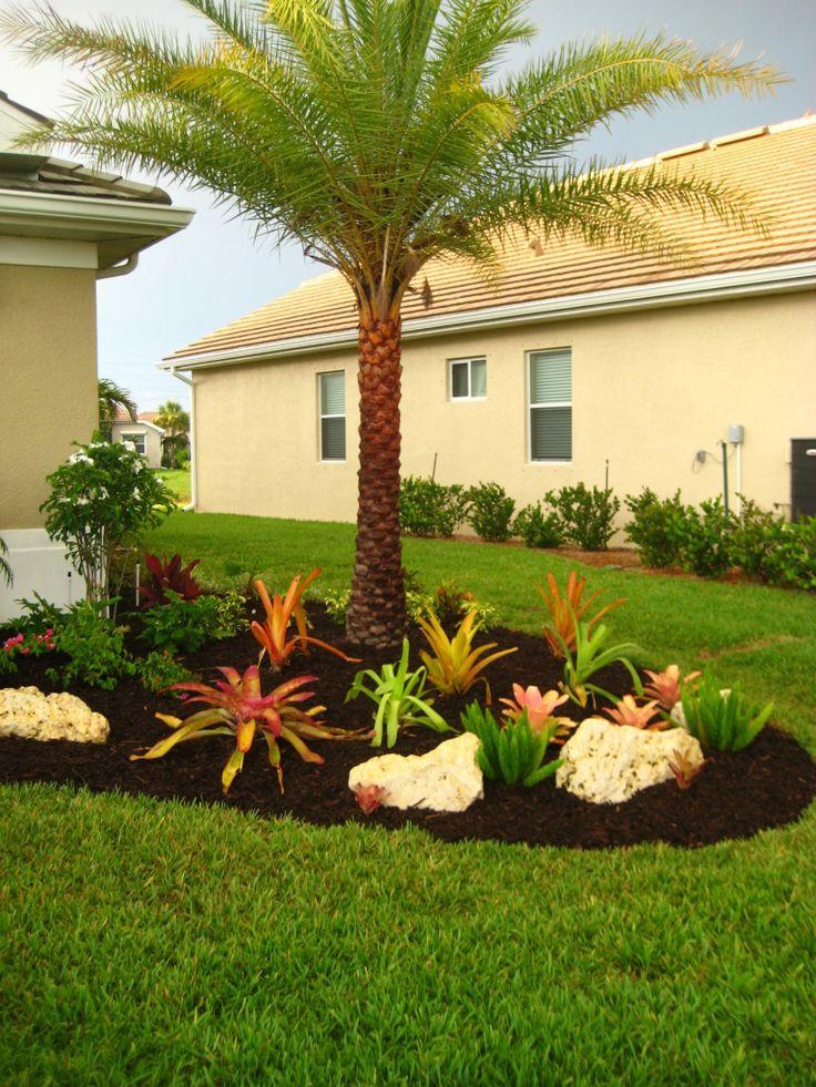 Multi Foxtail, Bromeliad gardening, Winkler landscape