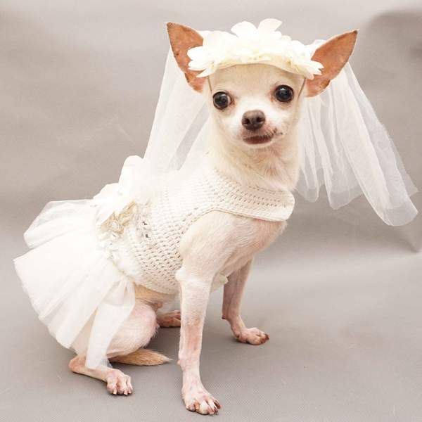 White Bridal Wedding Dog Dress With White Veil Hand Crochet Df95