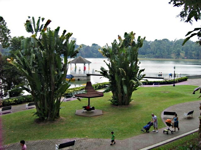 A hidden gem from Singapore. Macritchie Reservoir