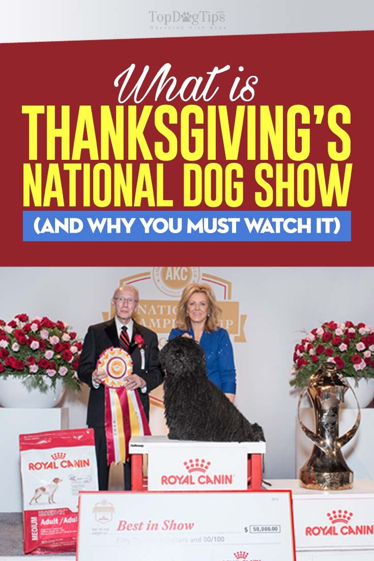 Thanksgiving Dog Show 2017