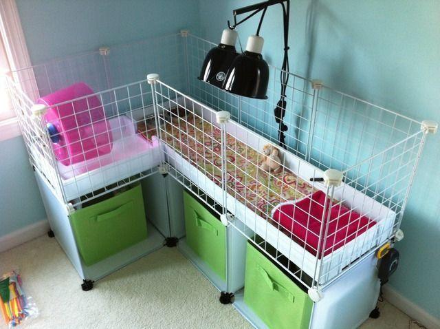 46 best Hedgehog cage ideas images on Pinterest | Guinea ...