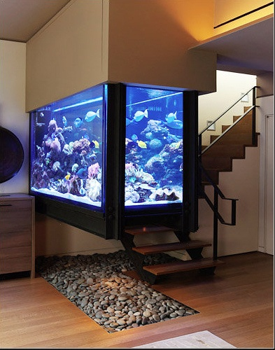 Aquarium tanks and the stone on pinterest for Fish tank design