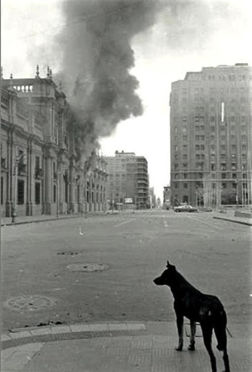 Chile, September 11th, 1973. A lonely dog stares at the horror, while the…