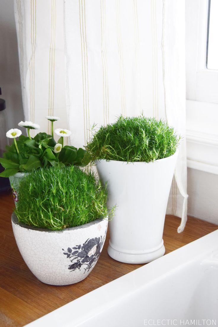 die besten 25 primeln ideen auf pinterest blumengarten blauer blumen name und blaue pflanzen. Black Bedroom Furniture Sets. Home Design Ideas