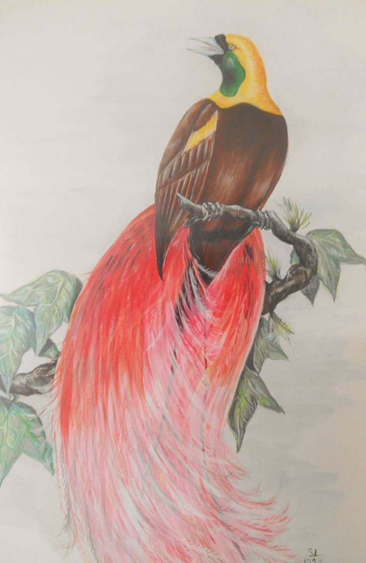 On of my colour pencil sketches from years ago!