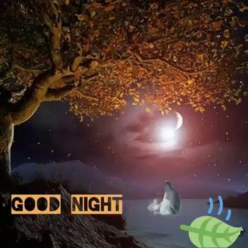 good night video mp4 hd download